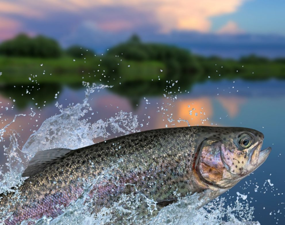 Fishing license online